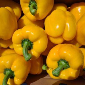 Paprika geel