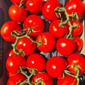 Tomaten tros - 5 stuks