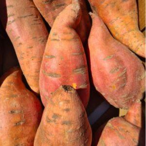 Zoete aardappel - 1,5 kilo